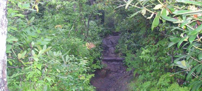 Fitness Quest: A Run in theWoods