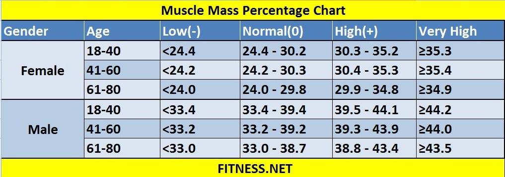 muscle-mass-percentage-chart