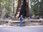 Standing in front of Grizzly Giant at Yosemite National Park.