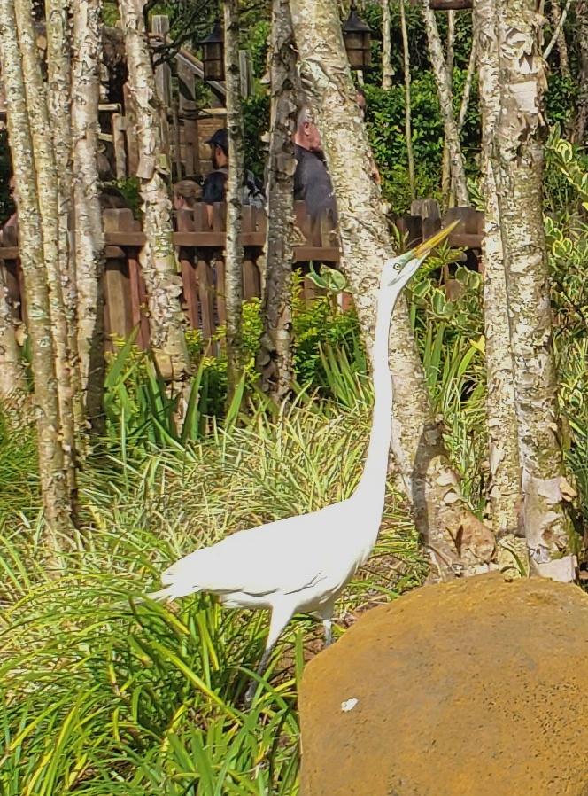 Heron at the Magic Kingdom.
